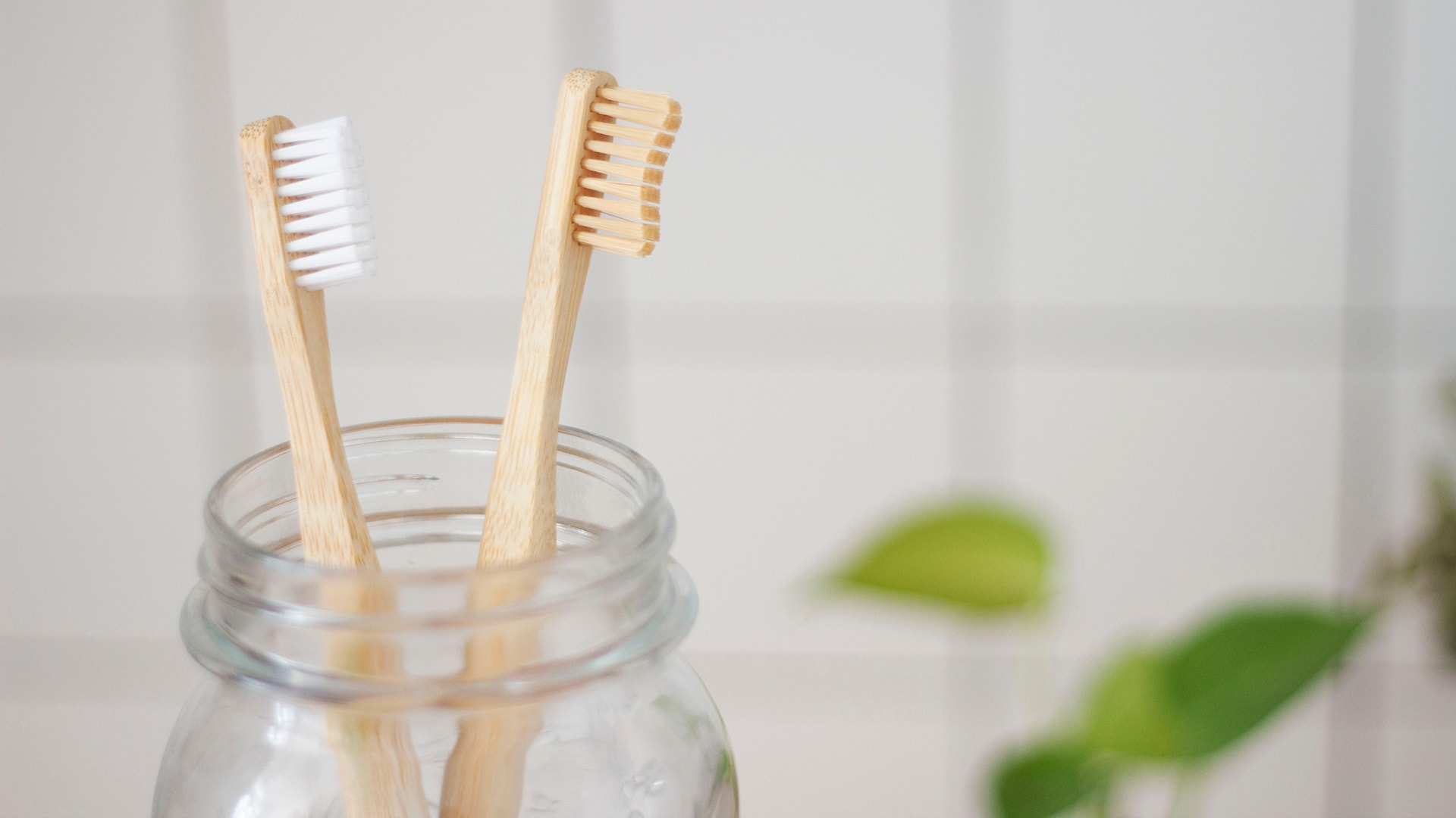 two toothbrushes - Stanley Dentistry in Cary, NC